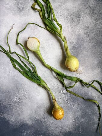Organic onions on slate textured surface, background. Ripe onions. Bulb onions, green spring. Top view. Stock fotó