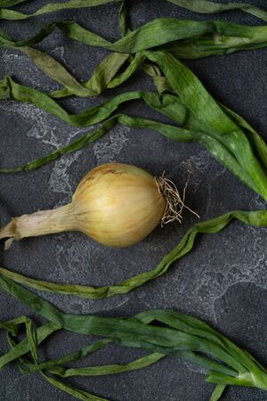 Organic onion with leaves on dark textured surface. Onions background. Ripe onions. Bulb onions, green spring. Top view. Stock fotó