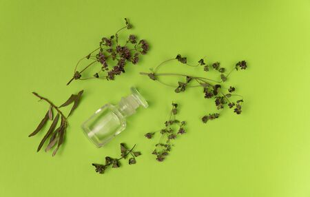 Dried herbs and empty vial on green background. Herbal medicine, essential oil. Alternative medicine concept. Background with copy space.