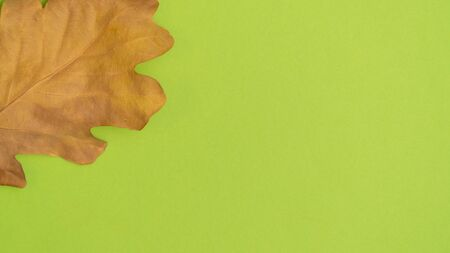 Dry yellow autumn oak leaf isolated on green background. Banco de Imagens