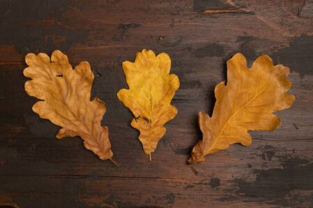 Three dried oak leaves on a brown wooden boards background, top view.
