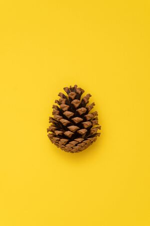 Brown pine cone isolated on yellow background. Фото со стока
