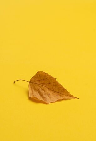Dried linden leaf on the yellow background Фото со стока