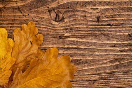 Dried oak leaves on a brown wooden boards background, top view. Фото со стока