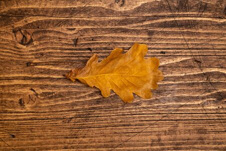 Dried oak leaf on brown wooden boards background, top view. Фото со стока