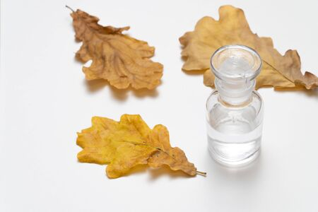 Oak tree leaves and glass bottle on white background.