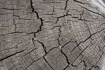 Old cracked tree stump texture. Wooden background. Фото со стока
