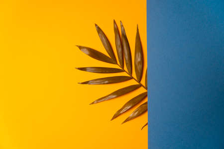 Tropical leaf on blue and yellow paper background. Flat lay, top view, minimal design template with copyspace