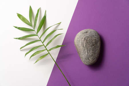 Tropical leaf and pebble stone on violet and white paper background. Flat lay, top view, minimal design template with copyspace Reklamní fotografie