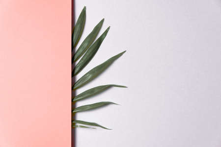 Tropical leaf on pink and white paper background. Flat lay, top view, minimal design template with copyspace