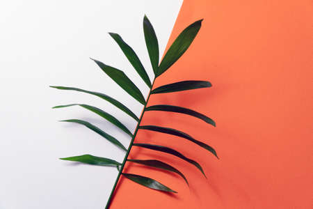 Tropical leaf on orange and white paper background. Flat lay, top view, minimal design template with copyspace Reklamní fotografie