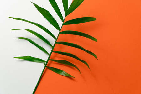 Tropical leaf on yellow and white paper background. Flat lay, top view, minimal design template with copyspace
