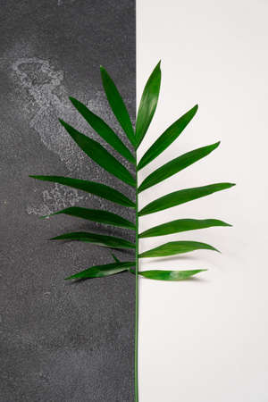 Green plant leaf on dark concrete and white paper background. Flat lay, top view, minimal design template with copyspace