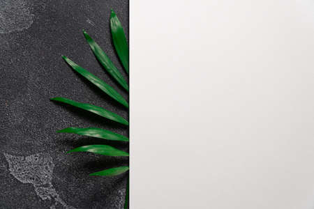Green plant leaf on dark concrete background and sheet of white paper. Flat lay, top view, minimal design template with copyspace Reklamní fotografie
