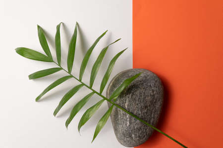Tropical plant leaf and pebble stone on orange and white paper background. Flat lay, top view, minimal design template with copyspace Reklamní fotografie