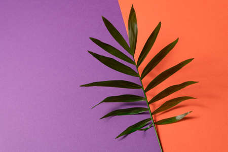 Tropical leaf on orange and violet paper background. Flat lay, top view, minimal design template with copyspace Reklamní fotografie