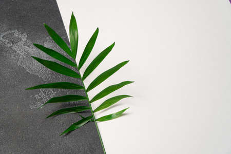Green plant leaf on dark concrete and white paper background. Flat lay, top view, minimal design template with copyspace. Reklamní fotografie