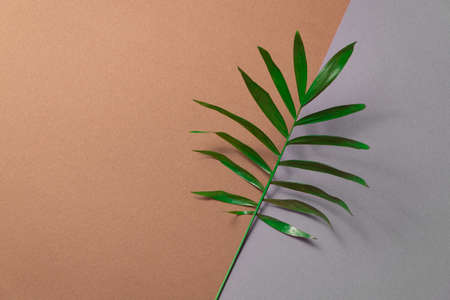 Tropical leaf on brown and grey paper background. Flat lay, top view, minimal design template with copyspace. Reklamní fotografie