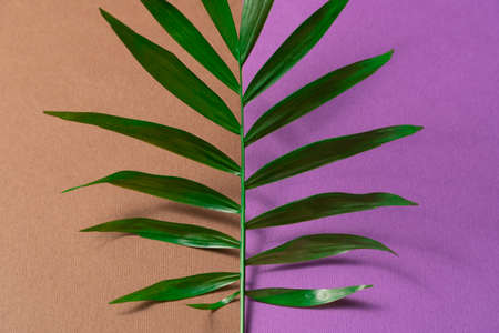 Tropical leaf on brown and violet paper background. Flat lay, top view, minimal design template with copyspace. Reklamní fotografie