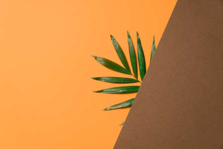 Tropical leaf on brown and orange paper background. Flat lay, top view, minimal design template with copyspace. Reklamní fotografie
