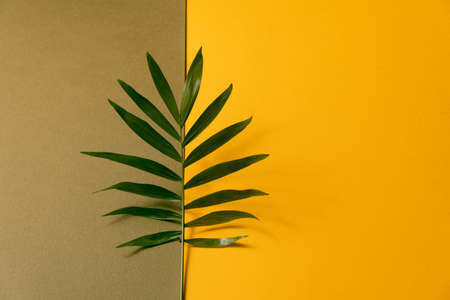 Tropical leaf on beige and yellow paper background. Flat lay, top view, minimal design template with copyspace. Reklamní fotografie