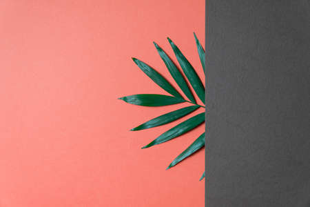 Tropical leaf on coral and grey paper background. Flat lay, top view, minimal design template with copyspace. Reklamní fotografie