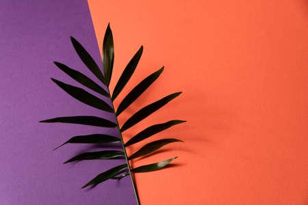 Tropical leaf on orange and violet paper