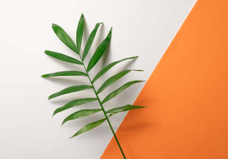 Tropical leaf on orange and white paper