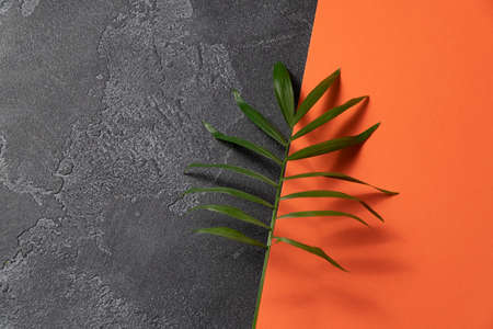 Green plant leaf on dark concrete and orange paper background. Flat lay, top view, minimal design template with copyspace.