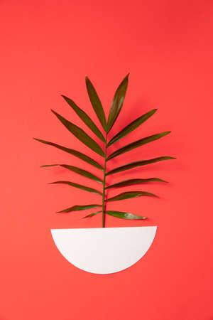 A branch of a green plant in a paper pot on a red background Reklamní fotografie