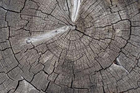 Old cracked tree stump texture. Wooden background. Reklamní fotografie