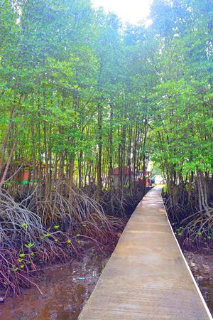 mangroves: bridge at mangroves garden