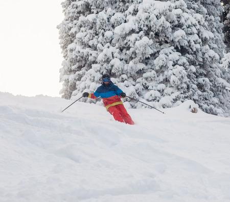 freeride: freeride ski on fresh snow