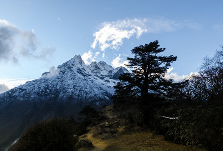 Natural beauty of the Himalayas, forest zone photo