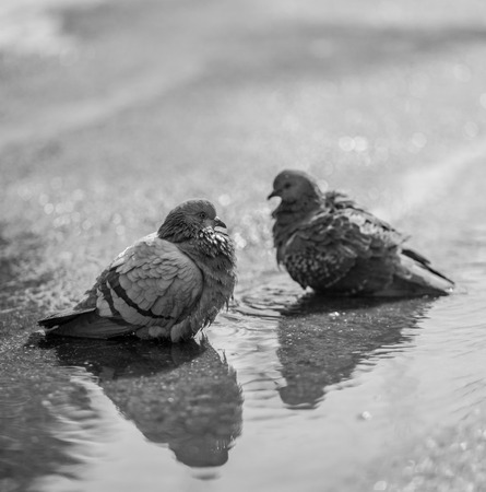 street birds preen feathers photo