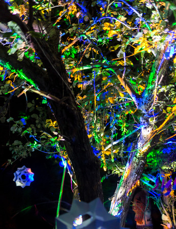 Night party on the nature photo