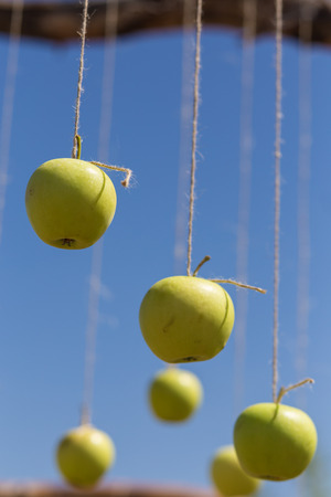 Apples hanging on a clothesline photo