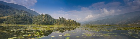 Picture of a Swan on a Lake in the Nepal photo