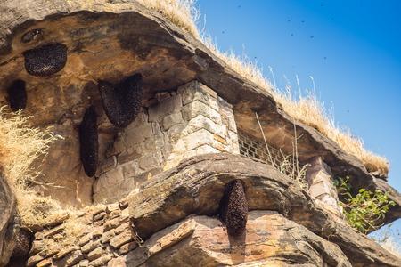 bee swarm: honey bee swarm on stone in cave, India Stock Photo