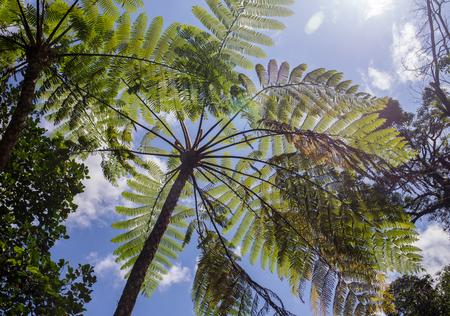 Big Fern leaf with water drops  close-up Standard-Bild