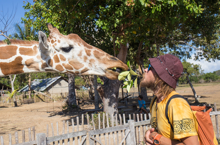 kruger park: Giraffes and man in Kruger park South Africa