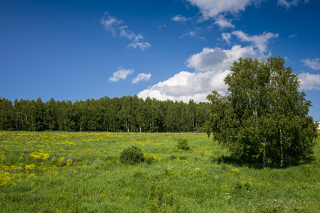walloon: Typical landscape of Walloon, Belgium with forest and field in bright summer day Stock Photo
