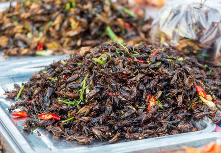 pile of filthy dishes infested with roaches. Stock Photo