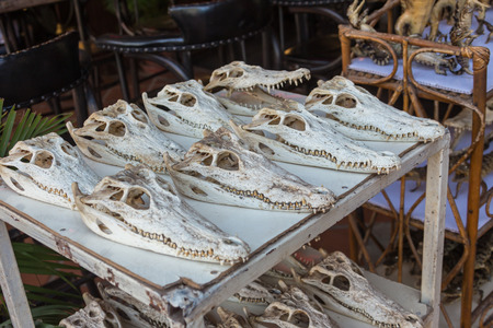 sunday market: Crocodile skull in the sunday market Cambodia Stock Photo