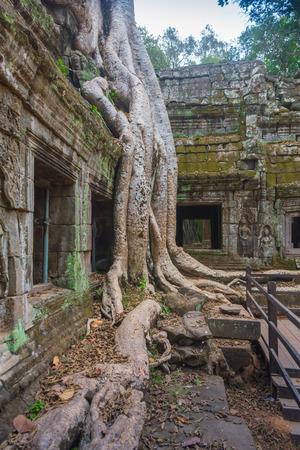 encroaching: The jungle encroaching on Ta Prohm Temple, Angkor, Cambodia.