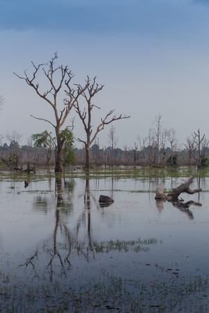 swamps: beautiful landscape in the Okavango swamps, Moremi game reserve landscape, Okavango Delta, Botswana Stock Photo