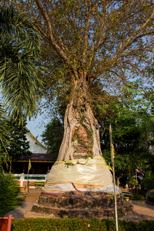 Ancient buddha head embeded in banyan tree from Ayutthaya, Thailand. Stock Photo