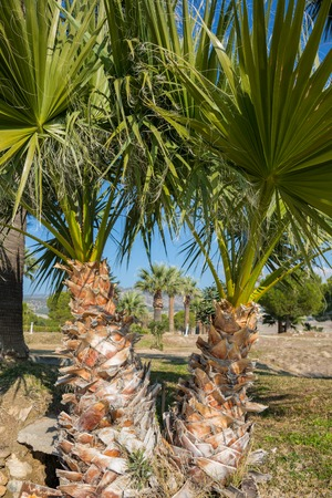 vintage palm background in Pamukkale Turkey