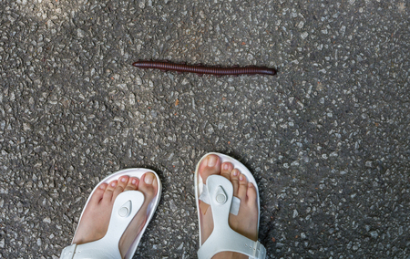 A huge millipede runs across the road right in front of the girls legs.