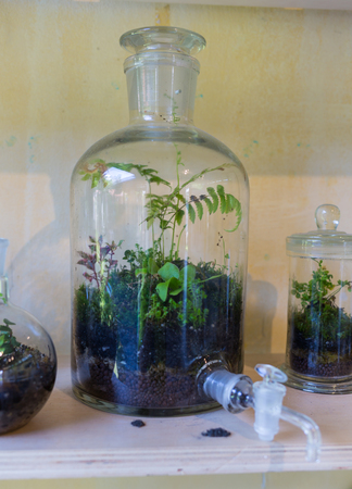 Plants grow in closed glass jars, a problem of ecology.